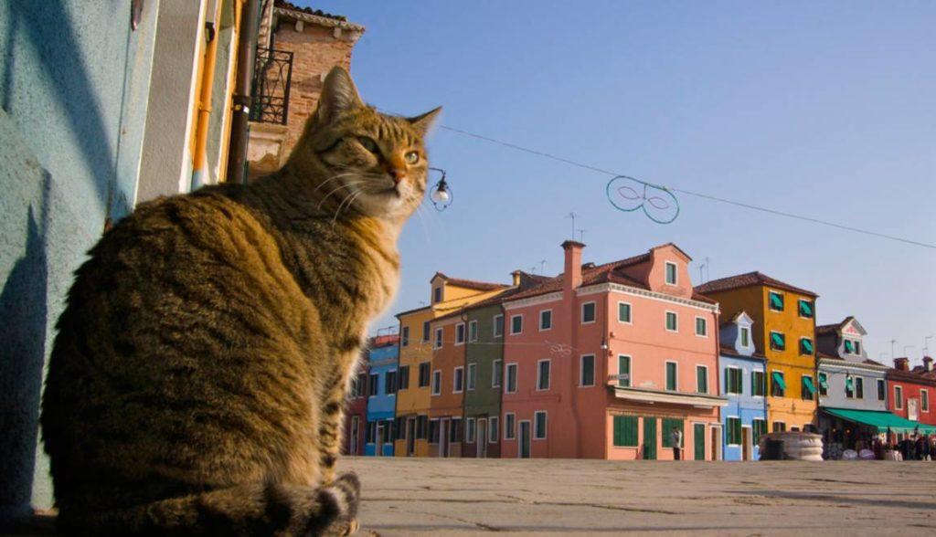 chat sur l' ȋle de Burano